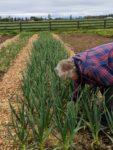 Ode to Joy Farm garlic